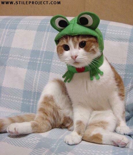 happy halloween (meow)