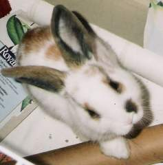 my bunny Nibbles!