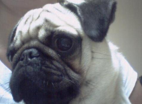 My pug dog! hehe