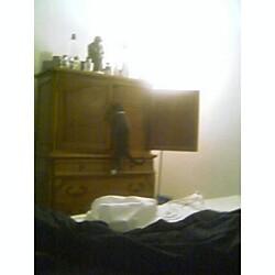 oj climbing the dresser like a weidoe