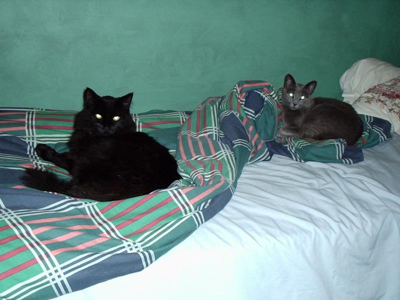 these are my kitty cats