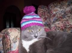 my beloved cat smokey.