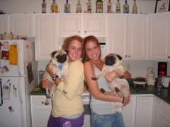 The Pugs and a great roomie!