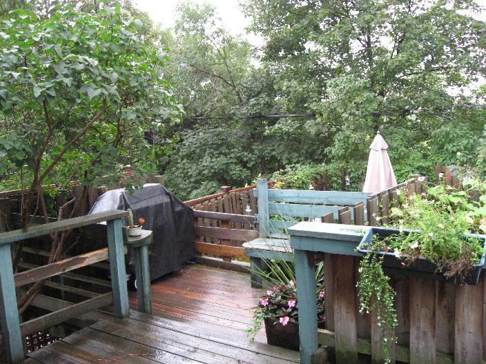Backyard After Rain