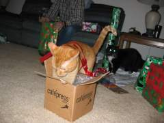 My cat Sam exploring boxes.