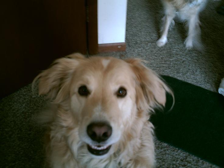 Mans best friend..DILBERT!
