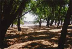 05 - River Paraná Islands - 03