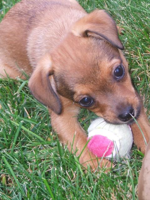 Zoeey Love Dog