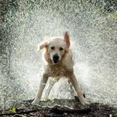 RainDawg