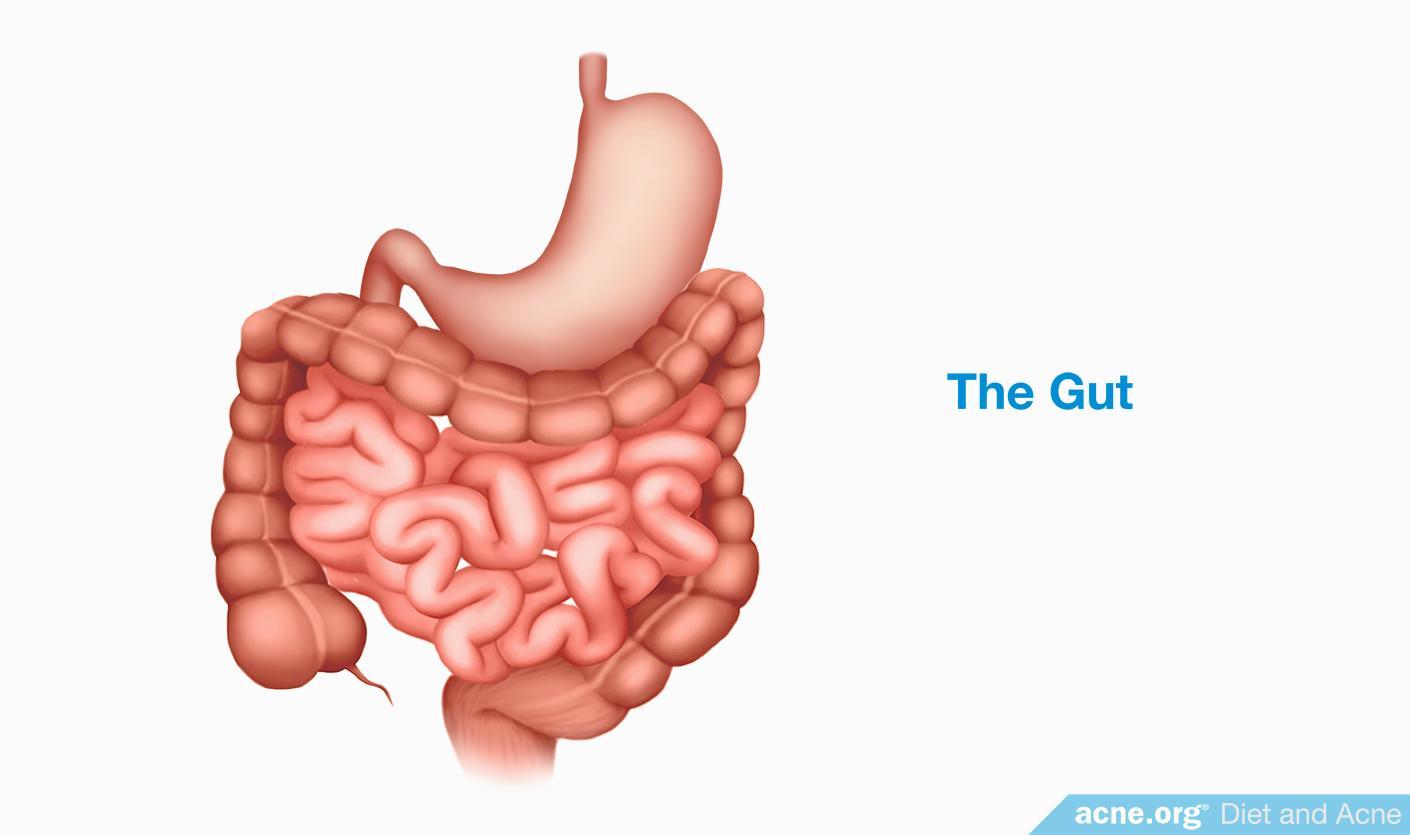 The Gut