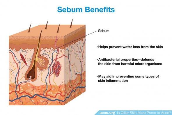 Sebum Benefits