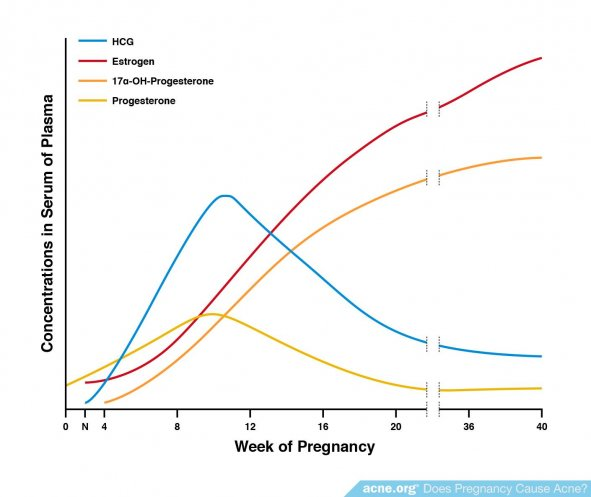Hormone Levels During Pregnancy