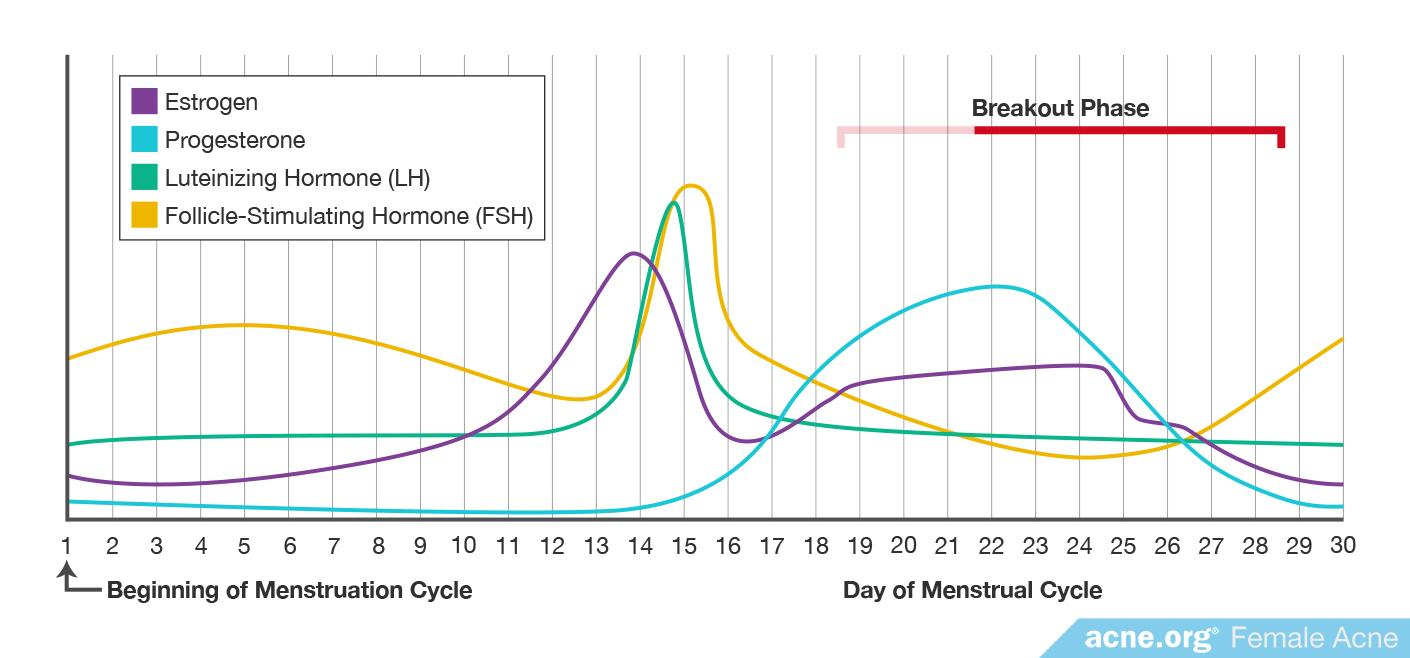 Graph Showing Hormone Production During Menstrual Cycle