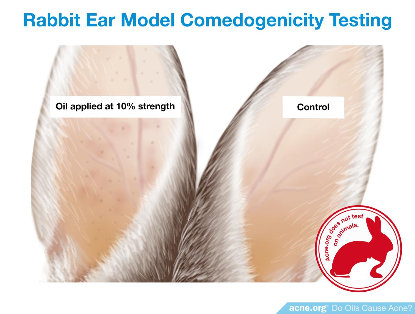 Rabbit Ear Model Comedogenicity Testing