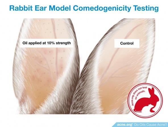 Rabbit Ear Model Comedogenicity Testing