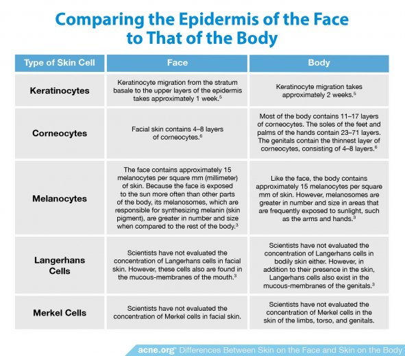 Comparing the Epidermis of the Face to That of the Body