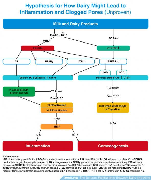 Hypothesis for How Dairy Might Lead to Inflammation and Clogged Pores (Unproven)