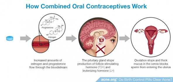 How Combined Oral Contraceptives Work
