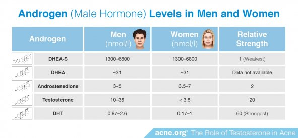 Androgen (Male Hormone) Levels in Men and Women