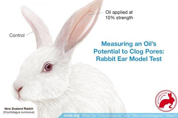 The Rabbit Ear Model Comedogenicity Test