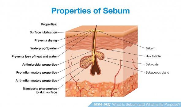 Properties of Sebum