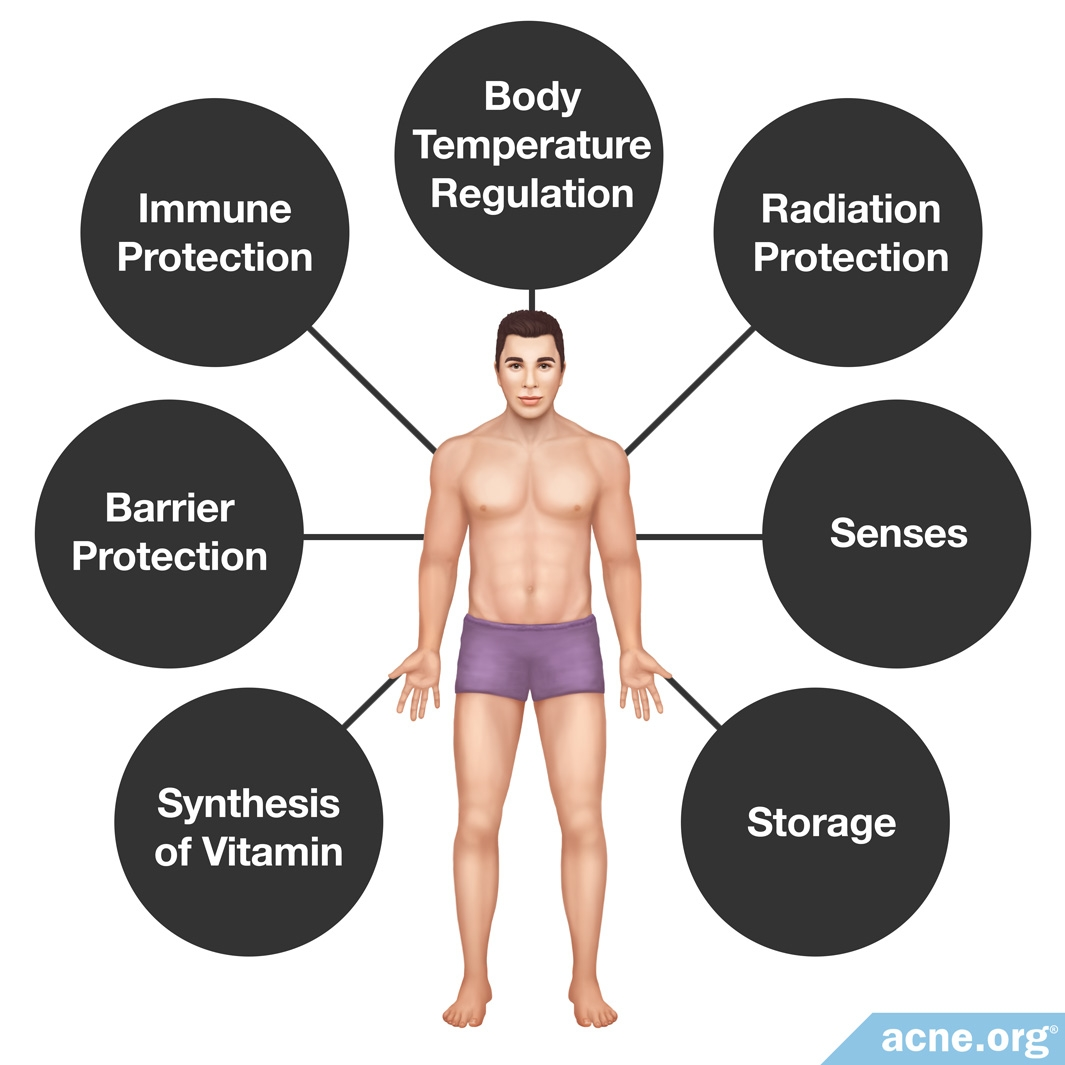 Functions of Human Skin