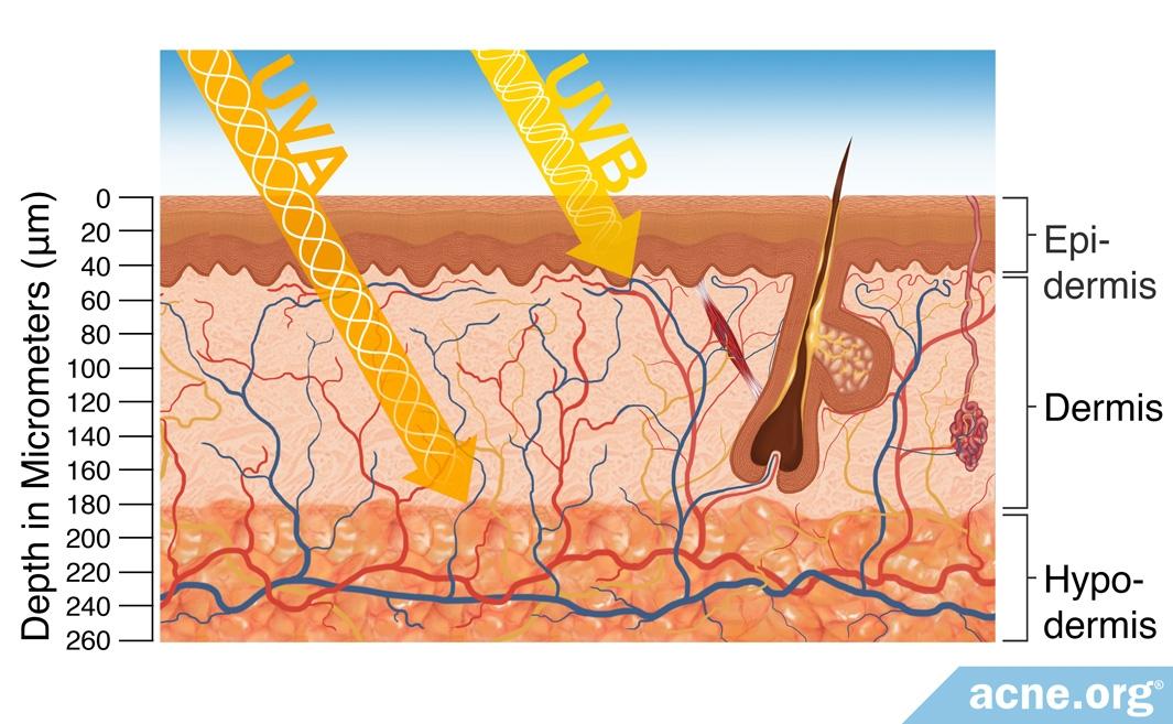 How Far UVA/UVB Rays Reach Into the Skin