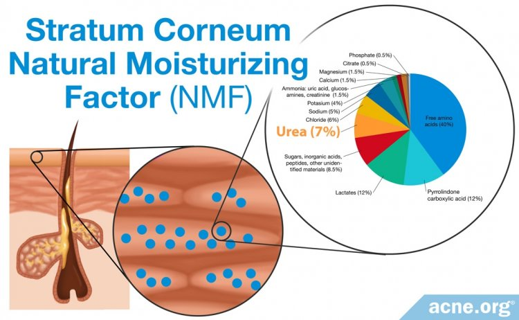 Natural Moisturizing Factor (NMF) Located in Stratum Corneum