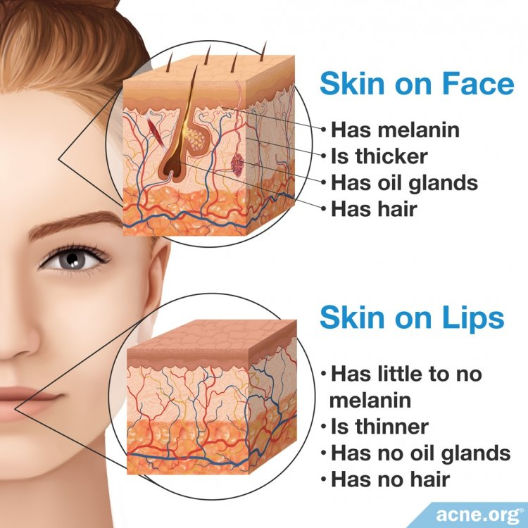 Skin on the Face vs. Skin on the Lips