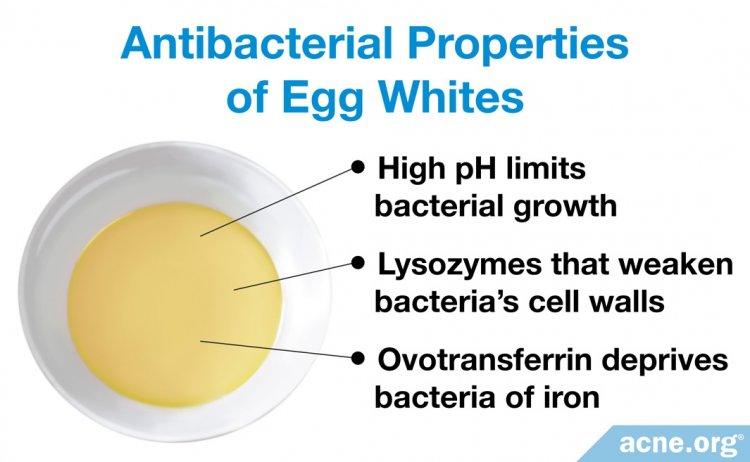 Antibacterial Properties of Egg Whites