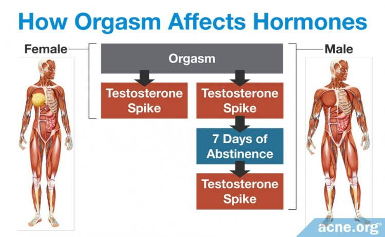 How Orgasm Affects Hormones