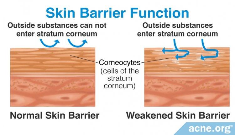 Skin Barrier Function