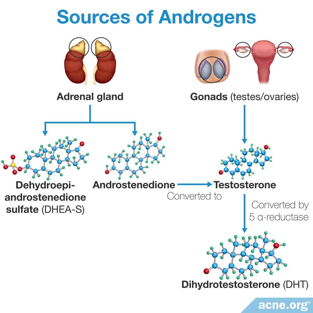 Sources of Androgens