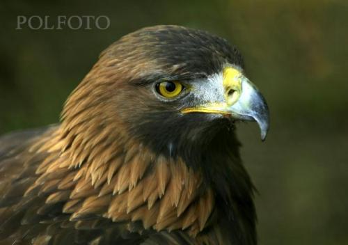 EaglesGirl's Photo