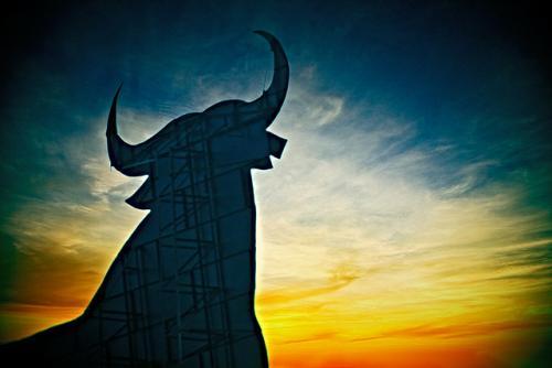 Toro's Photo