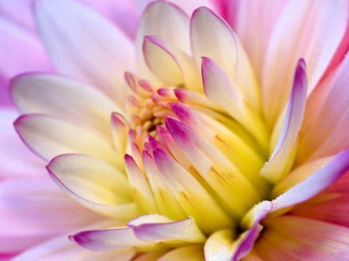 FlowerBud3's Photo
